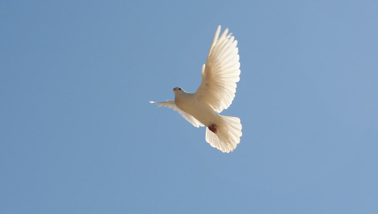 Niedziela Zesłania Ducha Świętego – komentarz do Ewangelii