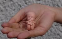 Podstawowa edukacja pro-life pilnie potrzebna