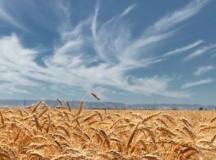 Szesnasta niedziela zwykła (A), 20 lipca 2014 – komentarz do Ewangelii