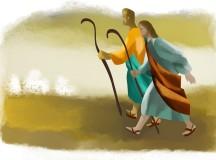 Piętnasta Niedziela Zwykła, 12 VII 2015 – komentarz do Ewangelii