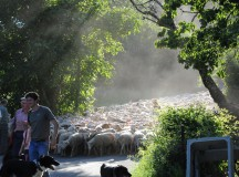 IV Niedziela Wielkanocna (Dobrego Pasterza), 25 kwietnia 2021 – komentarz do Ewangelii